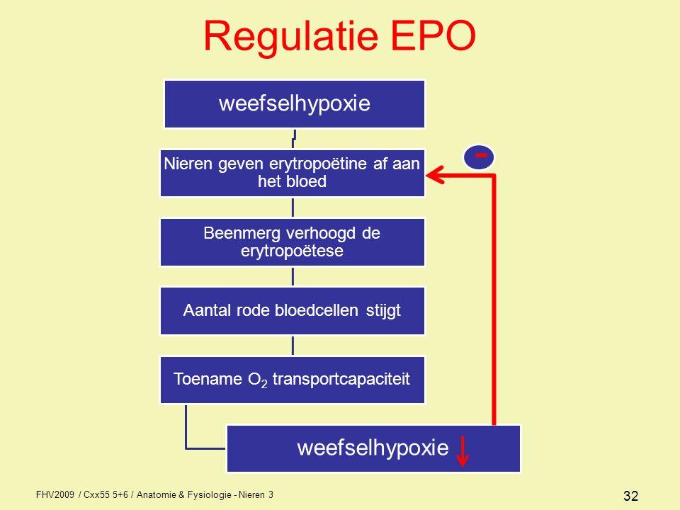 Regulatie EPO - weefselhypoxie