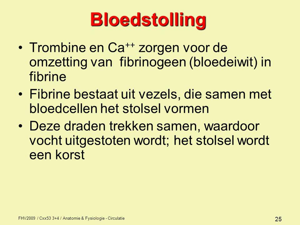 Bloedstolling Trombine en Ca++ zorgen voor de omzetting van fibrinogeen (bloedeiwit) in fibrine.