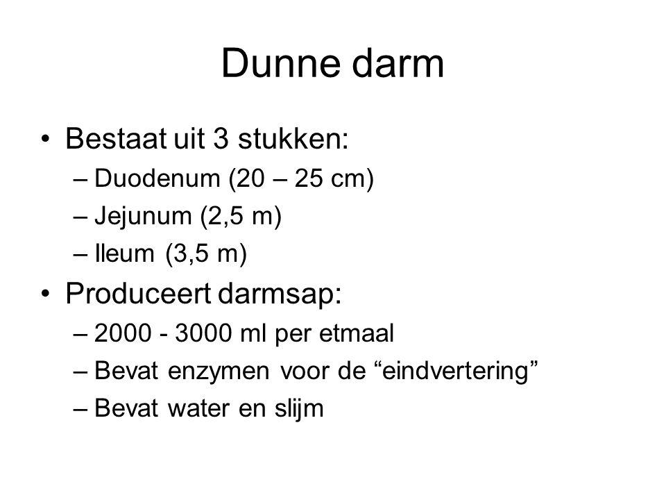 Dunne darm Bestaat uit 3 stukken: Produceert darmsap:
