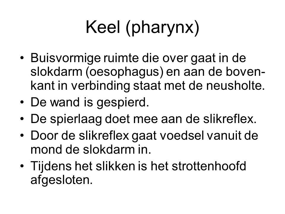 Keel (pharynx) Buisvormige ruimte die over gaat in de slokdarm (oesophagus) en aan de boven-kant in verbinding staat met de neusholte.