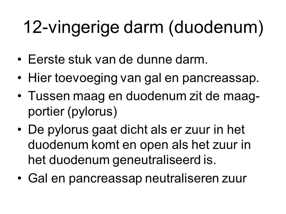 12-vingerige darm (duodenum)