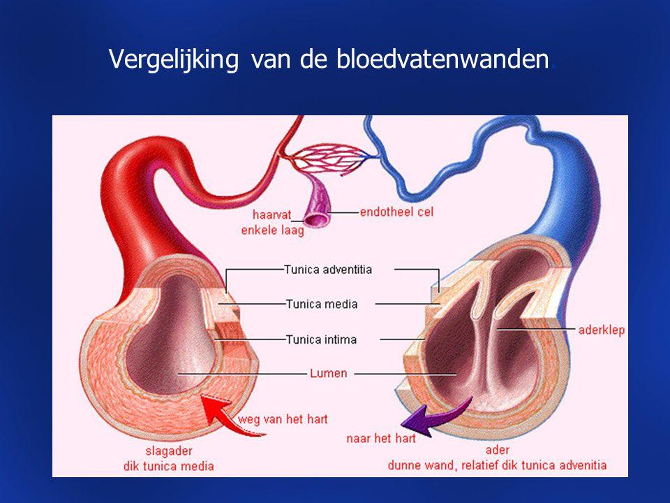 Vergelijking van de bloedvatenwanden.