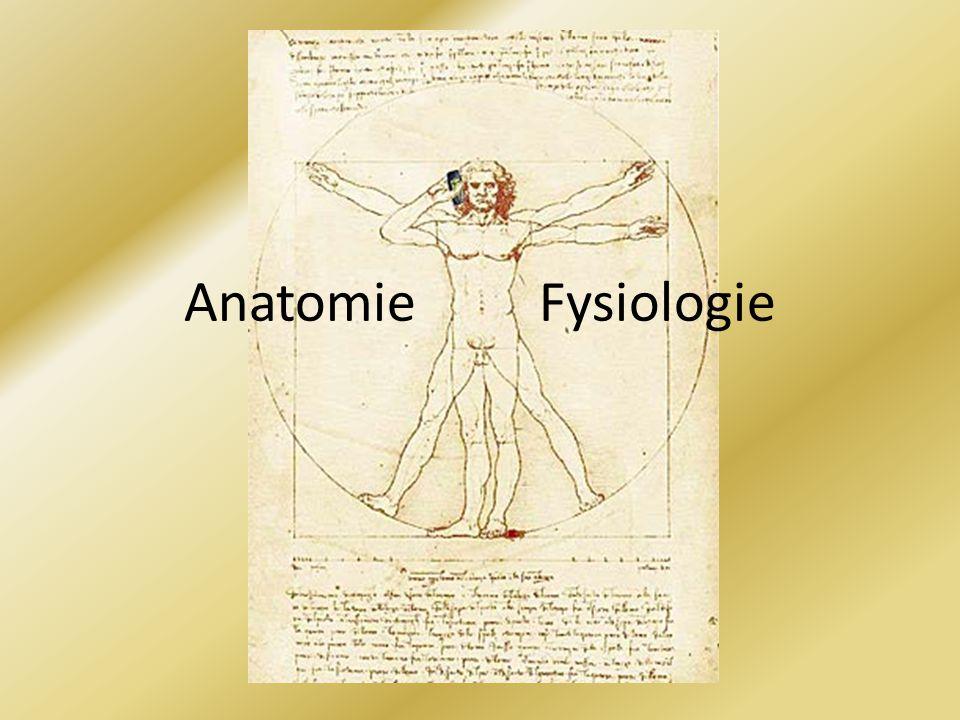 Anatomie Fysiologie
