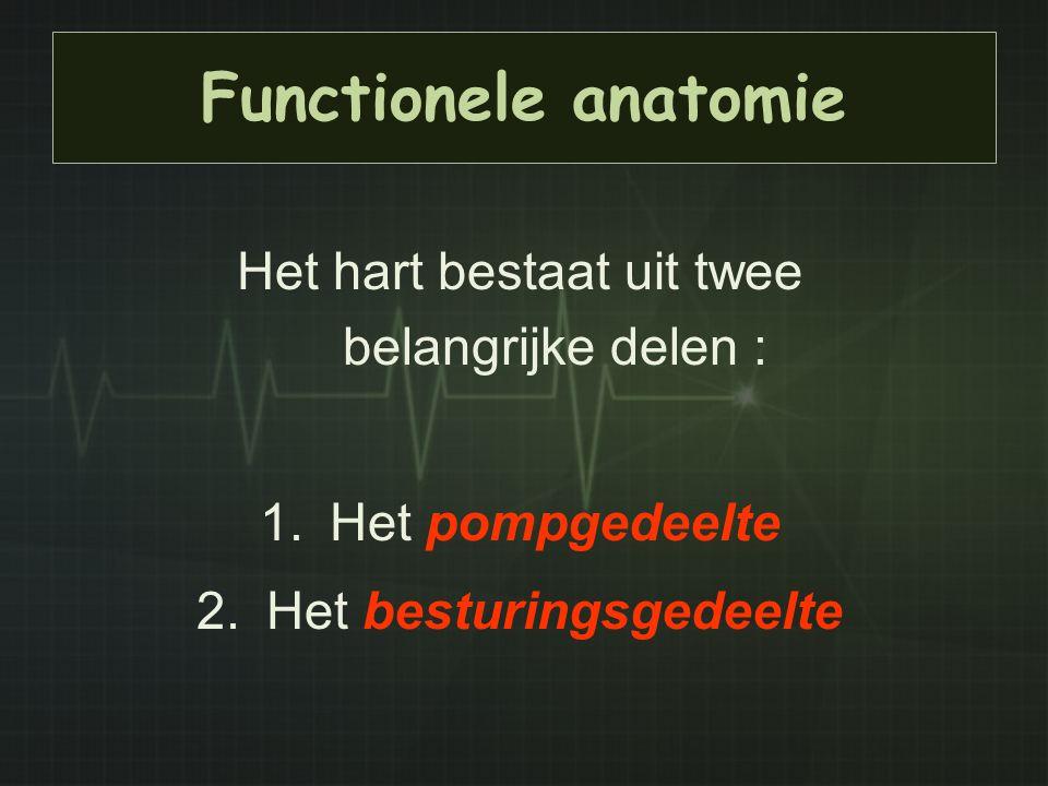 Functionele anatomie Het hart bestaat uit twee belangrijke delen :