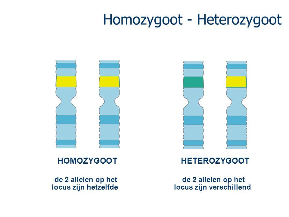 Homozygoot - Heterozygoot