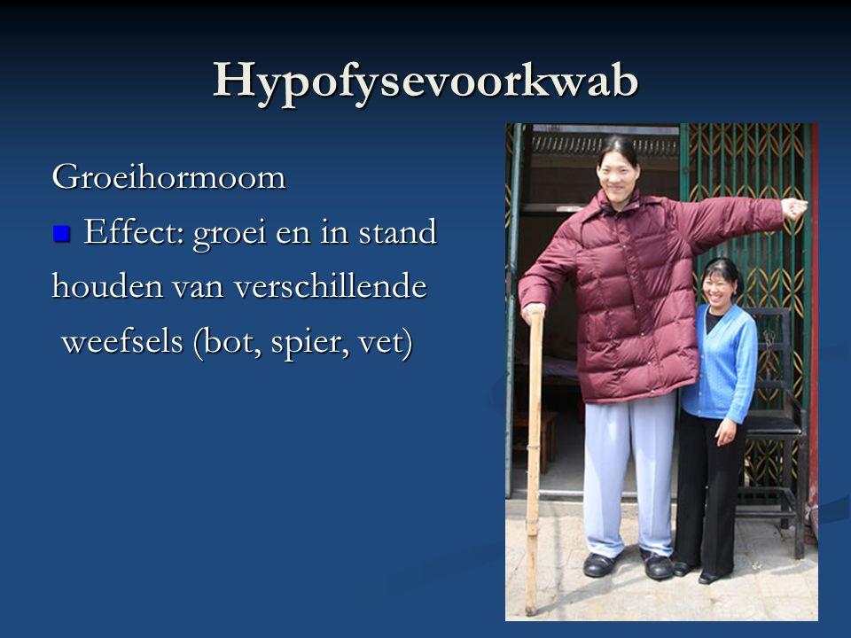 Hypofysevoorkwab Groeihormoom Effect: groei en in stand