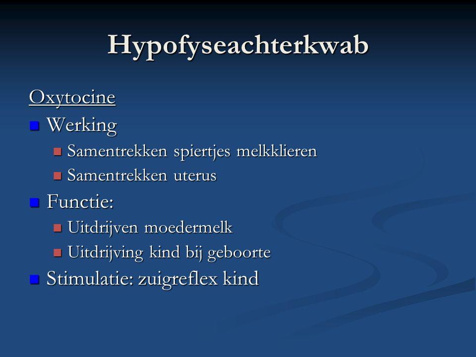 Hypofyseachterkwab Oxytocine Werking Functie: