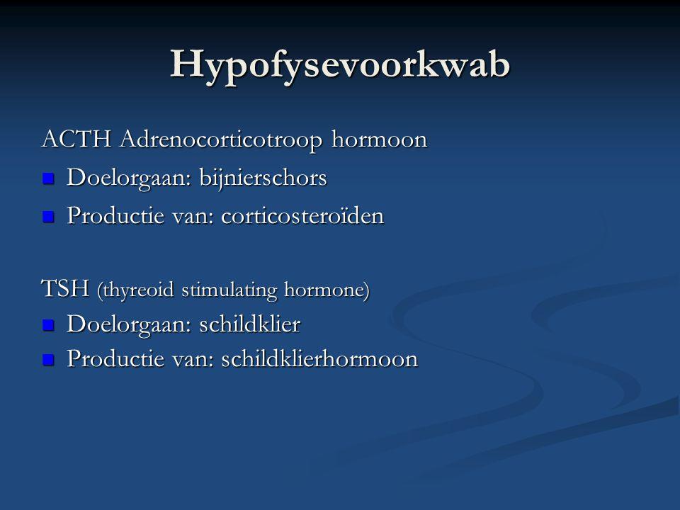 Hypofysevoorkwab ACTH Adrenocorticotroop hormoon