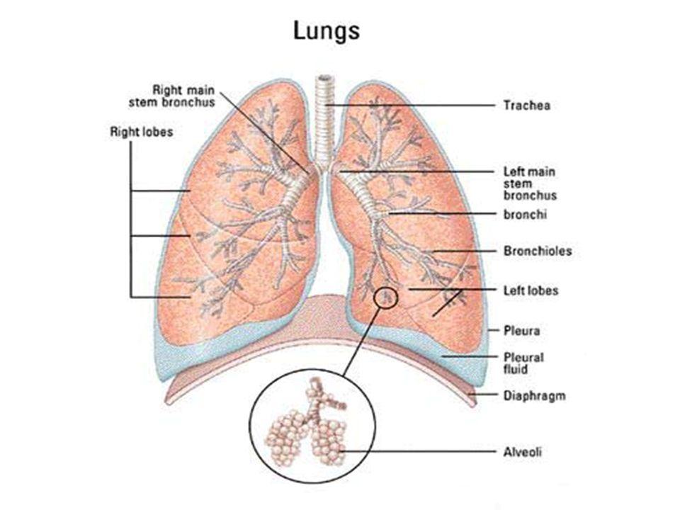 Chronische bronchitis (2)