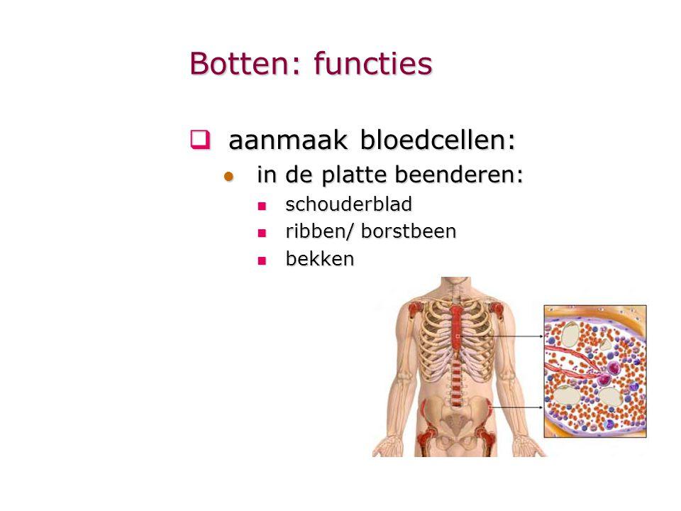 Botten: functies aanmaak bloedcellen: in de platte beenderen: