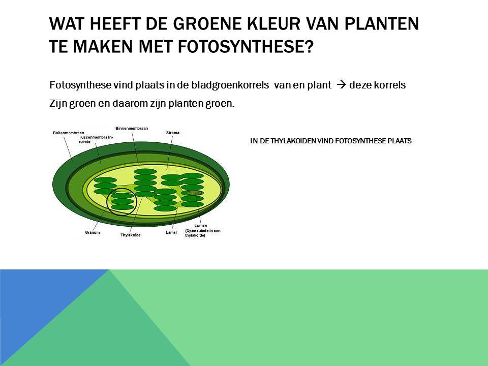 Wat heeft de groene kleur van planten te maken met fotosynthese