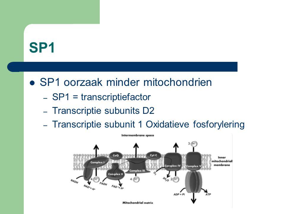 SP1 SP1 oorzaak minder mitochondrien SP1 = transcriptiefactor