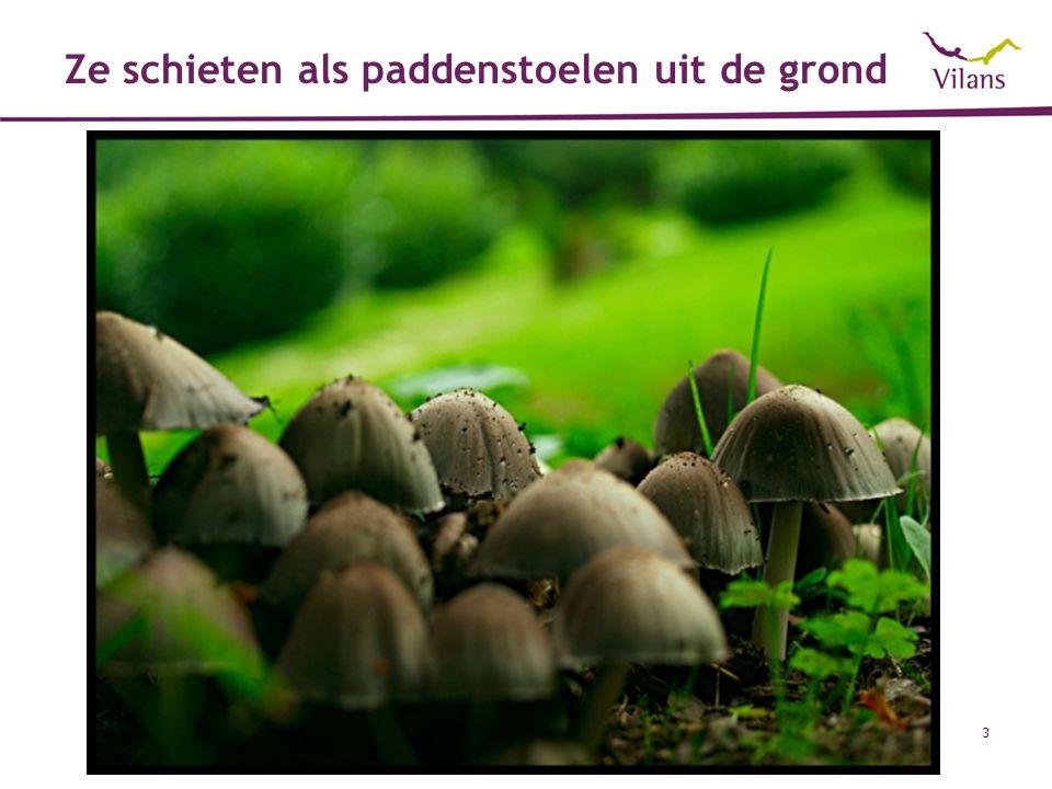 Ze schieten als paddenstoelen uit de grond
