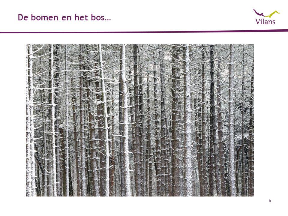 De bomen en het bos…