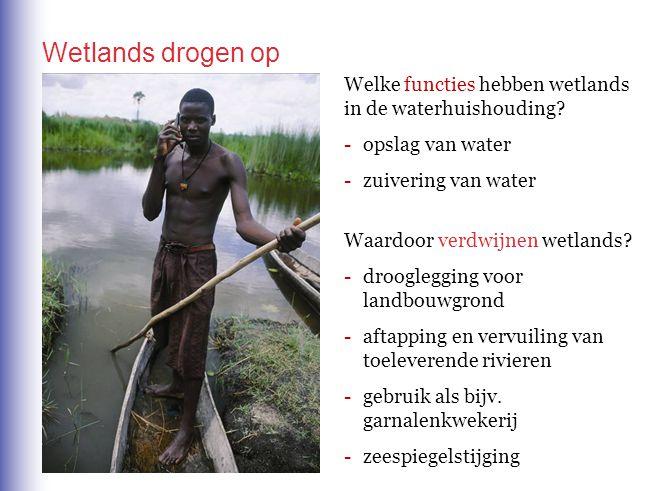 Wetlands drogen op Welke functies hebben wetlands in de waterhuishouding - opslag van water. - zuivering van water.