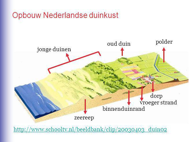 Opbouw Nederlandse duinkust