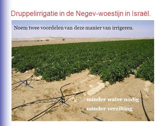 Druppelirrigatie in de Negev-woestijn in Israël.