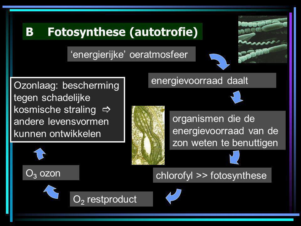 B Fotosynthese (autotrofie)