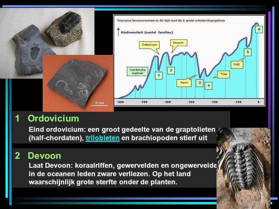 1 Ordovicium Eind ordovicium: een groot gedeelte van de graptolieten (half-chordaten), trilobieten en brachiopoden stierf uit.