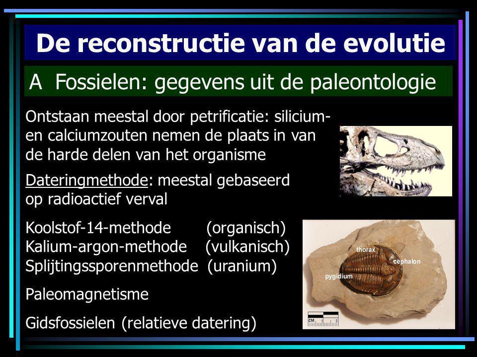 De reconstructie van de evolutie