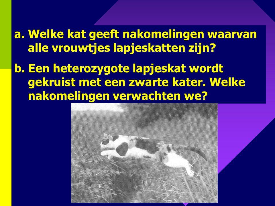 Welke kat geeft nakomelingen waarvan alle vrouwtjes lapjeskatten zijn