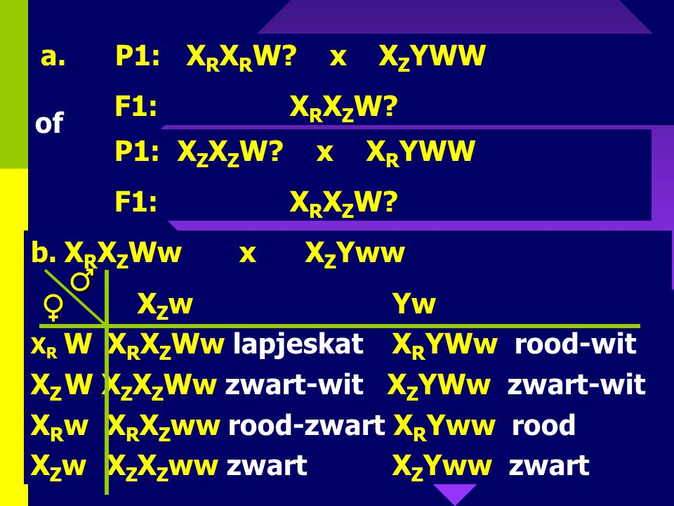 ♂ ♀ a. P1: XRXRW x XZYWW F1: XRXZW of P1: XZXZW x XRYWW F1: XRXZW