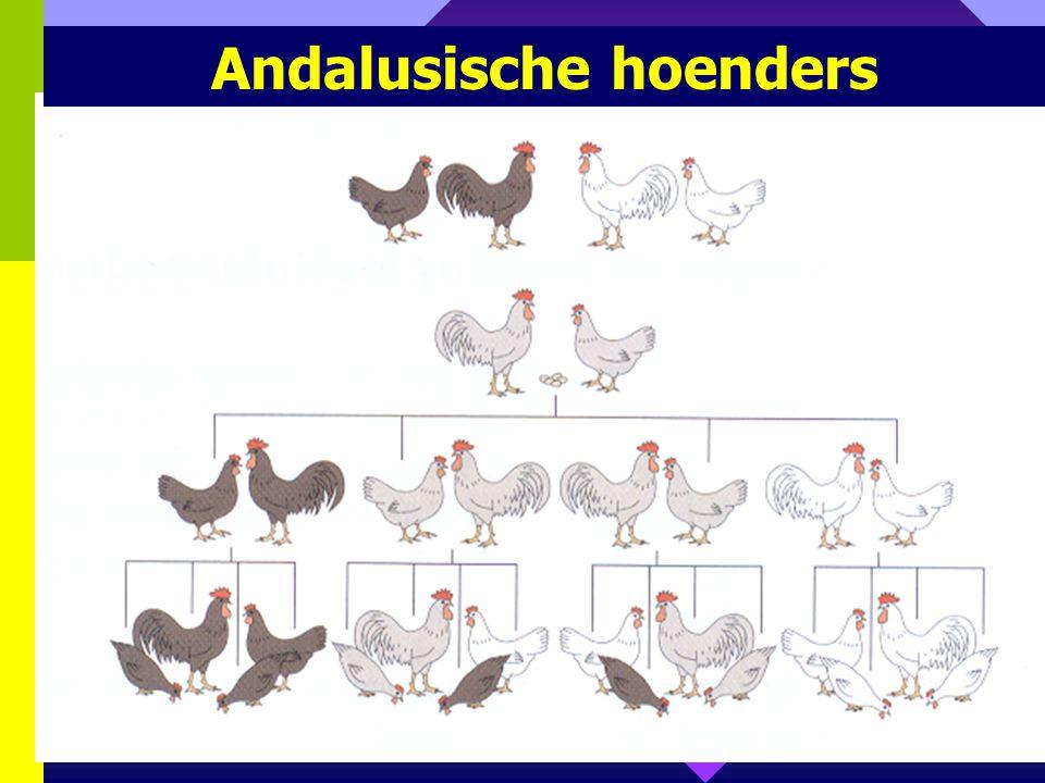 Andalusische hoenders