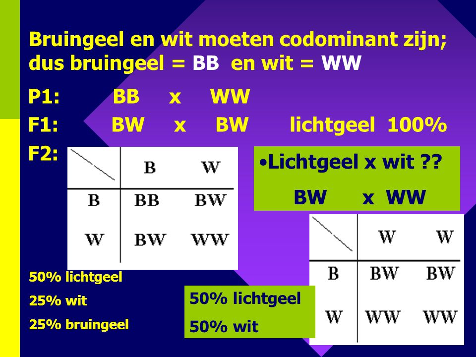Bruingeel en wit moeten codominant zijn; dus bruingeel = BB en wit = WW