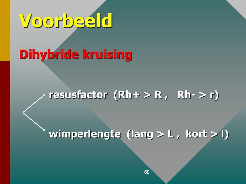 Voorbeeld Dihybride kruising resusfactor (Rh+ > R , Rh- > r)