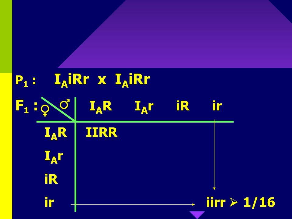 ♂ ♀ F1 : IAR IAr iR ir IAR IIRR IAr iR ir iirr  1/16