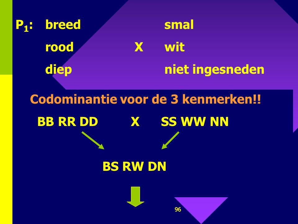 P1: breed smal rood X wit. diep niet ingesneden. Codominantie voor de 3 kenmerken!! BB RR DD X SS WW NN.