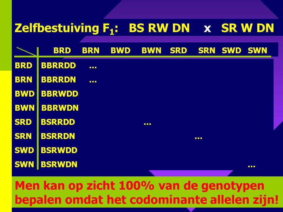 Zelfbestuiving F1: BS RW DN x SR W DN
