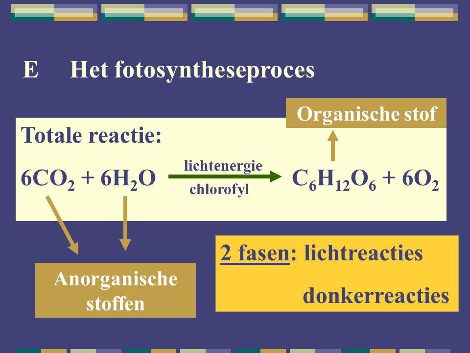 E Het fotosyntheseproces