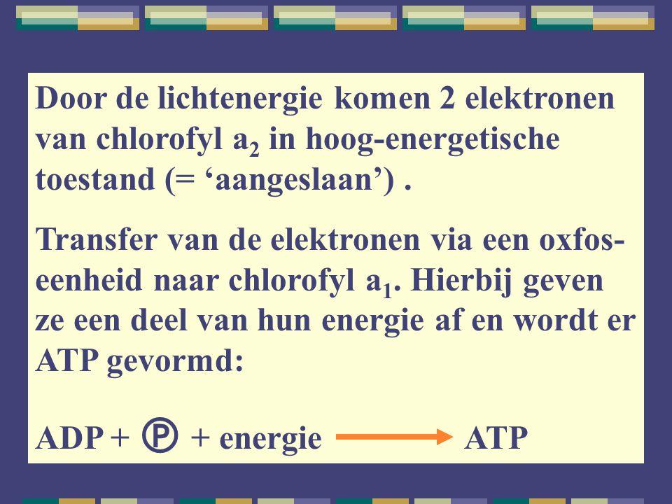 Door de lichtenergie komen 2 elektronen van chlorofyl a2 in hoog-energetische toestand (= 'aangeslaan') .