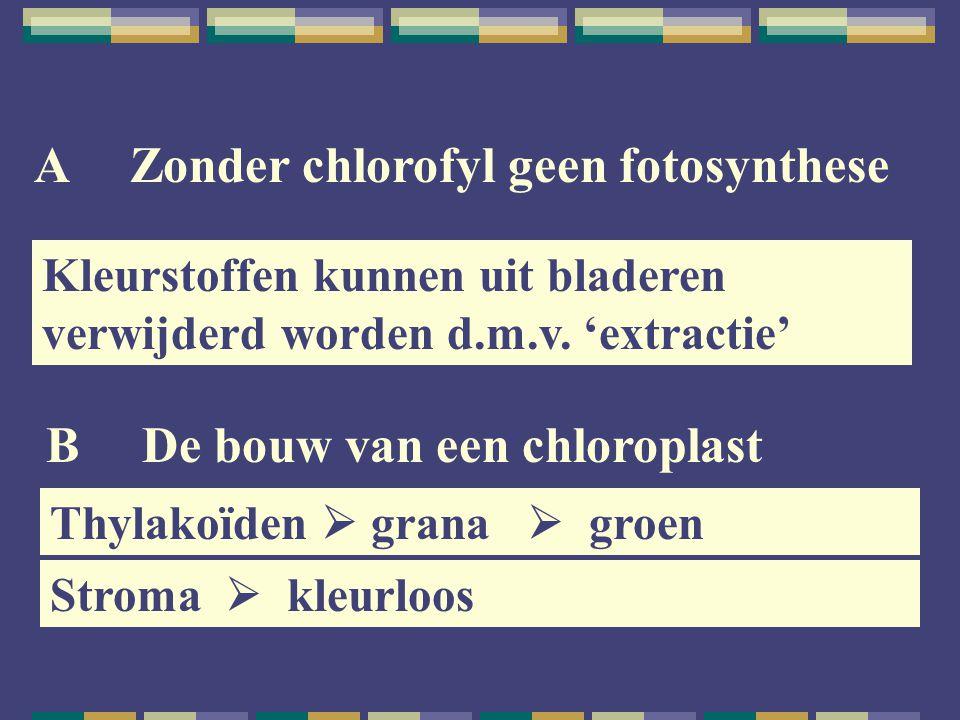 A Zonder chlorofyl geen fotosynthese