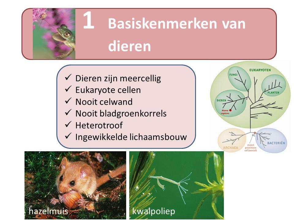 1 Basiskenmerken van dieren
