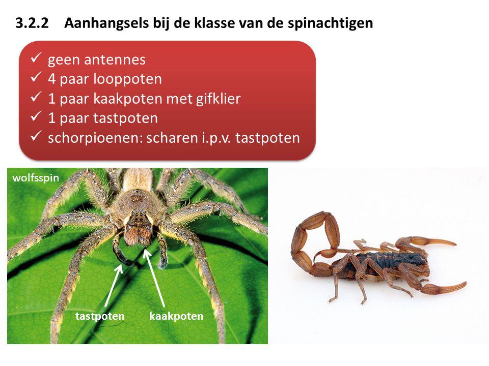 3.2.2 Aanhangsels bij de klasse van de spinachtigen