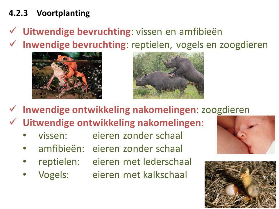 Uitwendige bevruchting: vissen en amfibieën