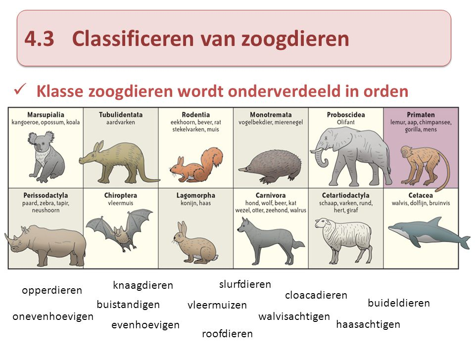 4.3 Classificeren van zoogdieren