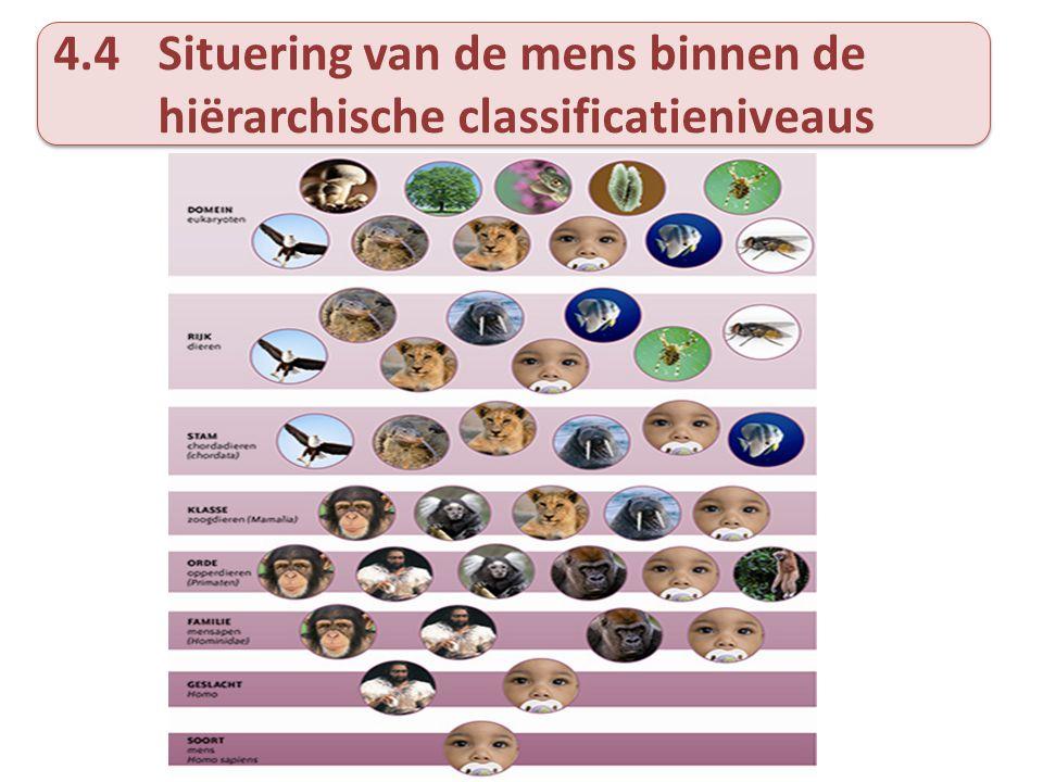 4.4 Situering van de mens binnen de hiërarchische classificatieniveaus