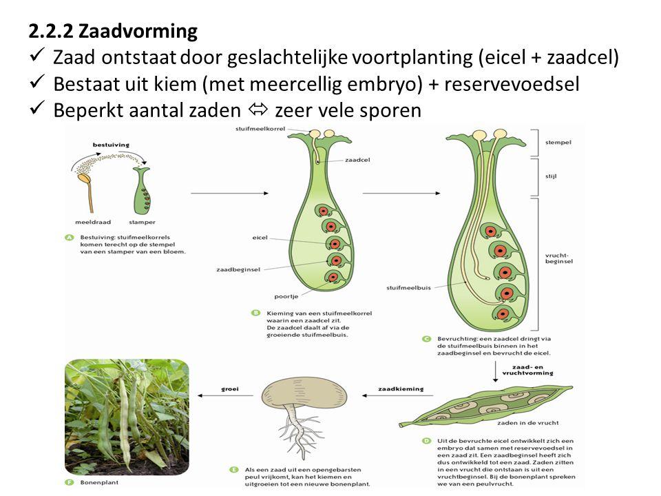 2.2.2 Zaadvorming Zaad ontstaat door geslachtelijke voortplanting (eicel + zaadcel) Bestaat uit kiem (met meercellig embryo) + reservevoedsel.