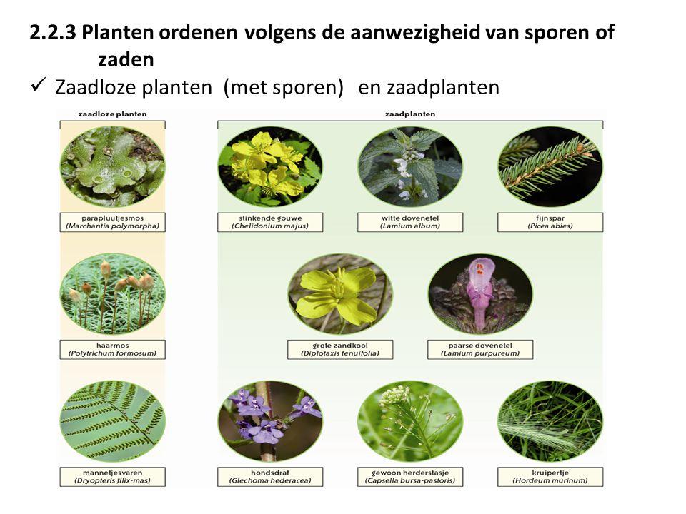 2.2.3 Planten ordenen volgens de aanwezigheid van sporen of zaden