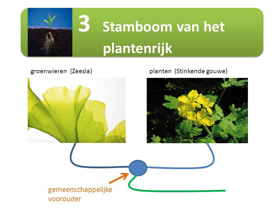 3 Stamboom van het plantenrijk