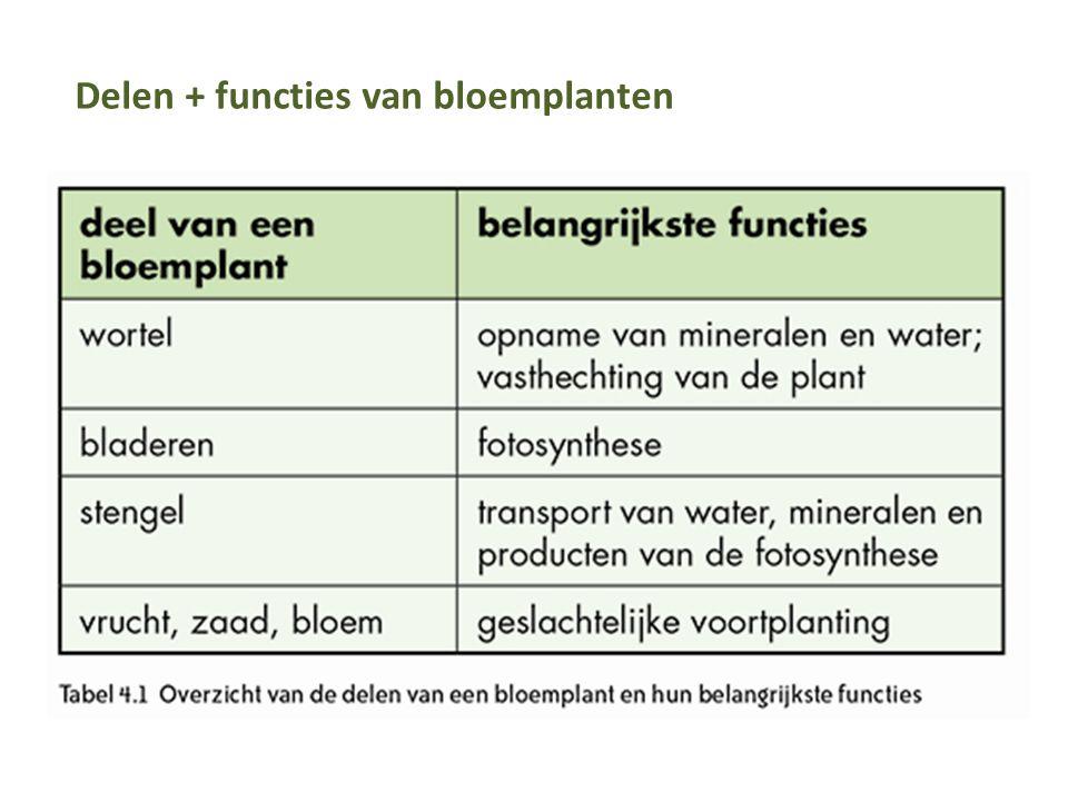 Delen + functies van bloemplanten