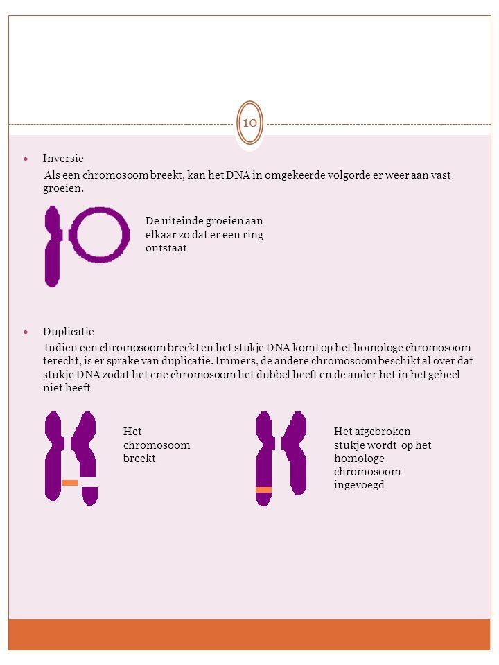Inversie Als een chromosoom breekt, kan het DNA in omgekeerde volgorde er weer aan vast groeien. Duplicatie.