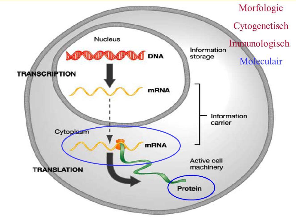 Morfologie Cytogenetisch Immunologisch Moleculair