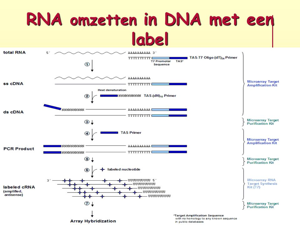 RNA omzetten in DNA met een label