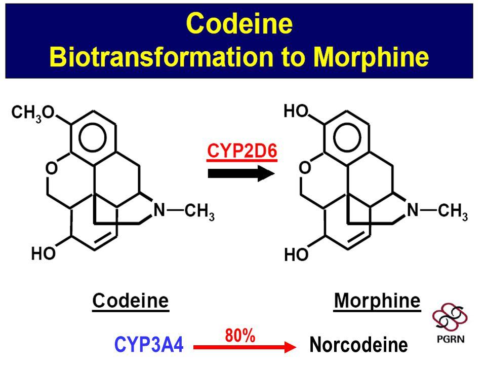 CYP3A4 Norcodeine 80%