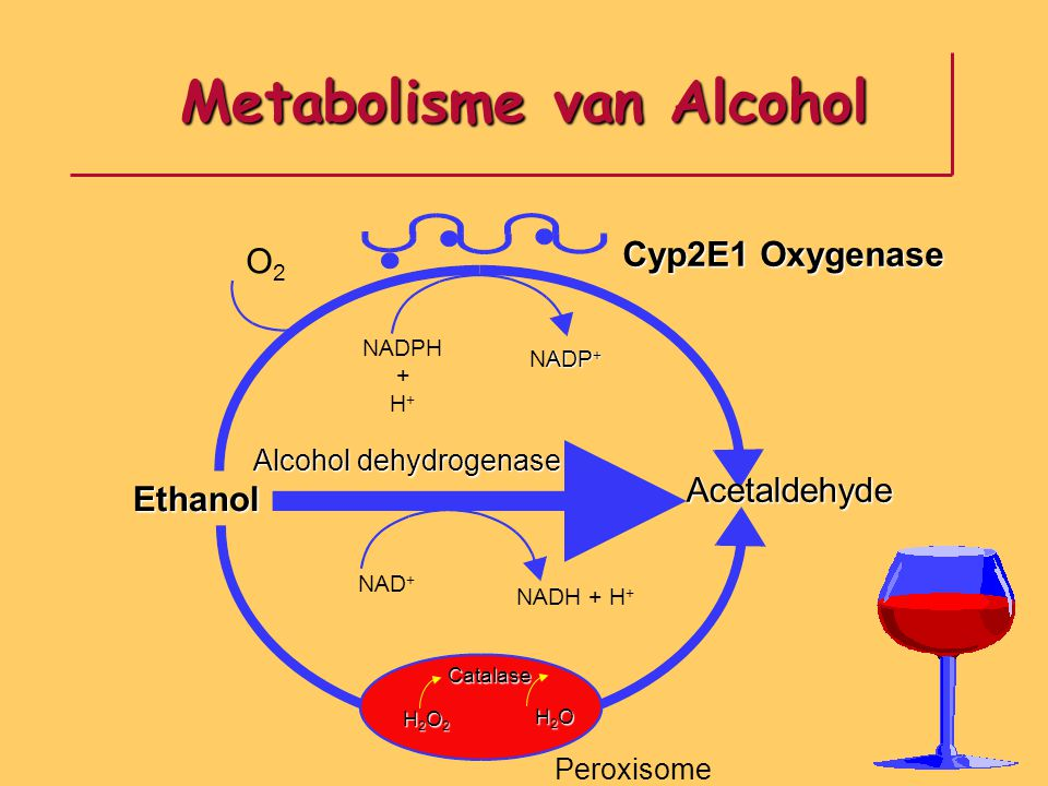 Metabolisme van Alcohol
