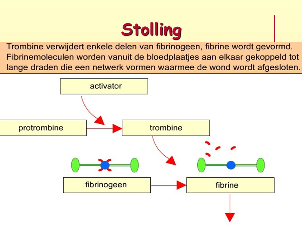 Stolling